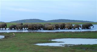 Great Elephant Gathering, The