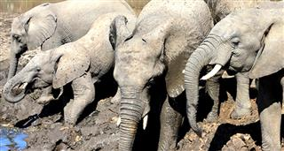 Dangerous Trails: Elephants In The Minefield