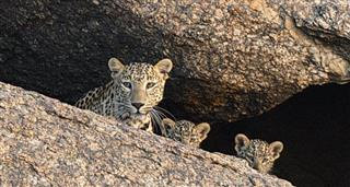 Leopard Rocks, The