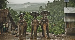 Mahout: The Great Elephant Walk