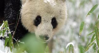 Rare Survivors: China's Iconic Wildlife