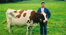 Standard Of Perfection: Show Cattle, The