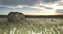 Wild & Woolly: An Elephant And His Sheep