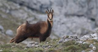 Wildlife In The Cantabrian Mountains