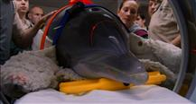 Zoo Vets: Fangs, Flippers And Tusks (Series 3)