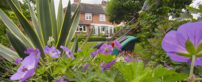 British Garden: Life And Death On Your Lawn