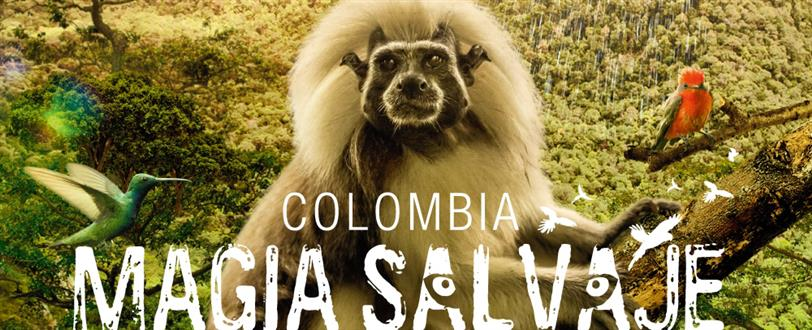 Colombia: Wild Magic (Magia Salvaje)
