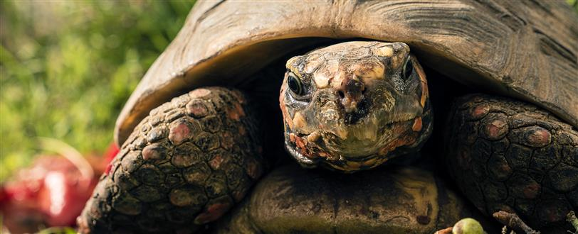 Little Matters: Turtles