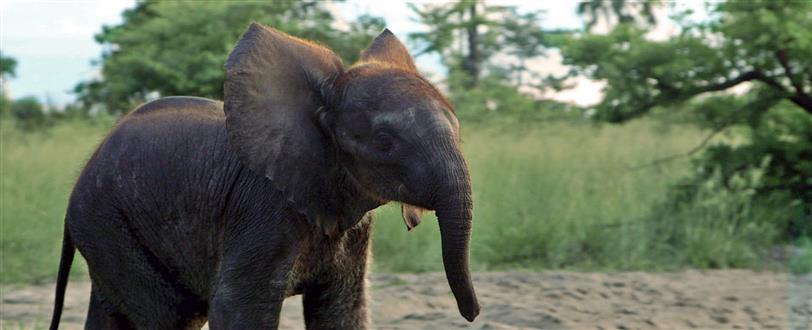 naledi a baby elephants tale dvd